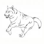Coloriage Loup de montagne