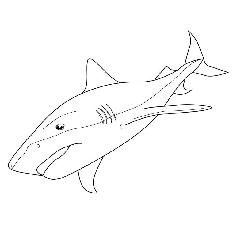 Coloriage Requin à imprimer sur COLORIAGES .info