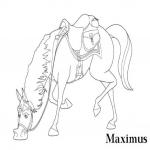 Coloriage Maximus cheval