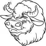 Bison dessin à colorier