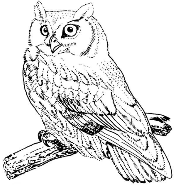 Birds of prey coloring pages for adults birds best free for Birds of prey coloring pages