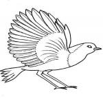 Coloriage Ailes d'oiseau