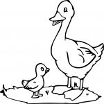 Cane et caneton dessin à colorier