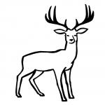 Coloriage Cerf