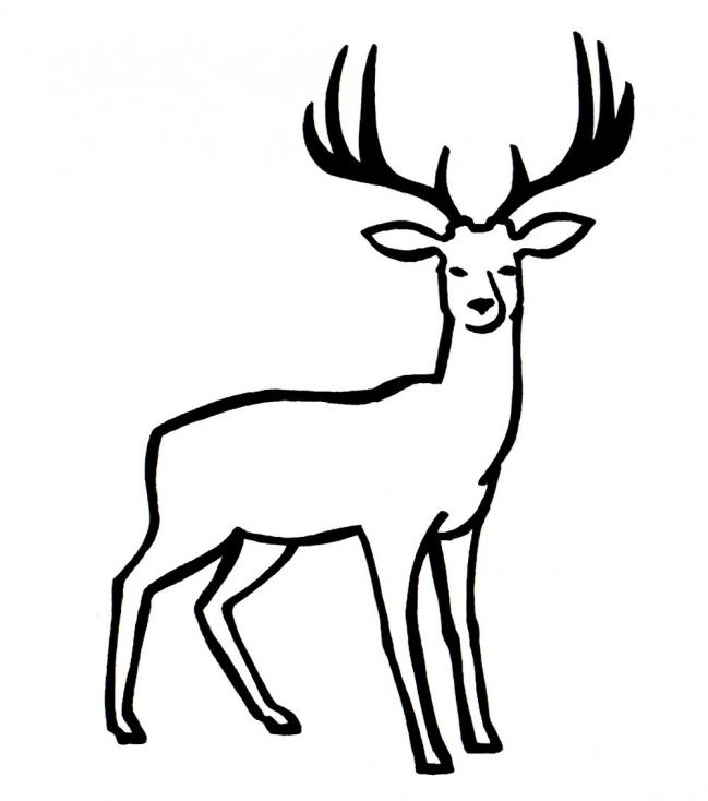 Coloriage Cerf à imprimer