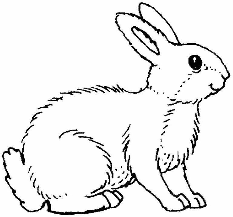 Coloriage Lapin animal à imprimer