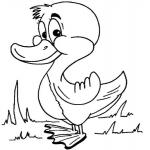 Coloriage Petit canard