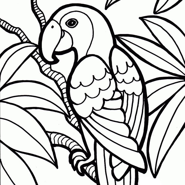Coloriage perroquet dessin imprimer sur coloriages info - Dessins de perroquets ...