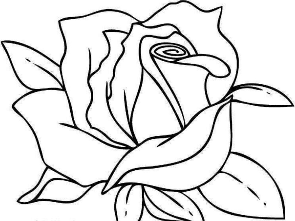 Coloriage Fleur Rose 224 Imprimer Sur Coloriages Info Flower Coloring Pages For 10 And Up Printable
