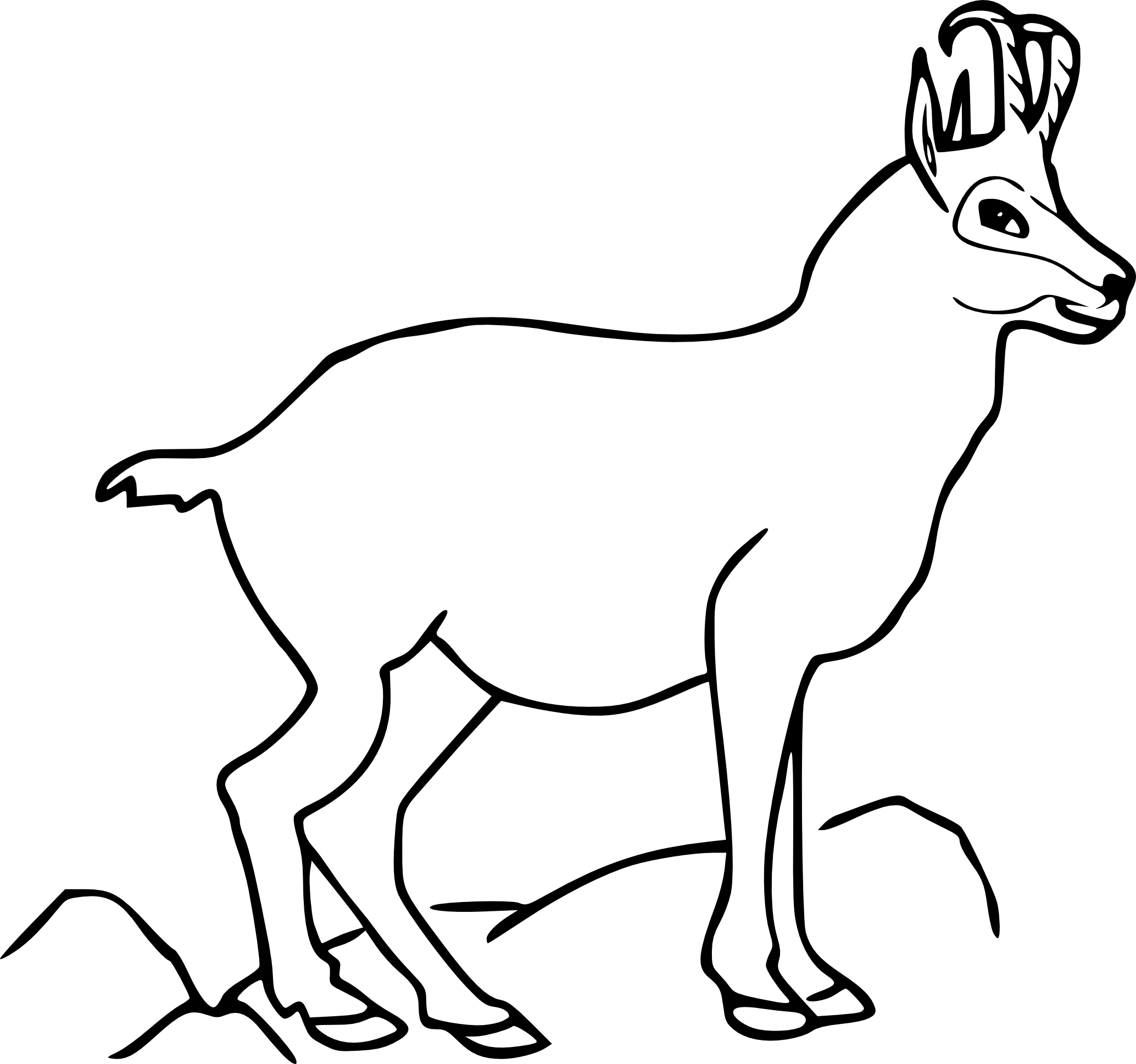 Tags:79 Best North American Animals Images On Pinterest,Coloring Pages  Pinterest,Explore Deer Coloring Pages And More! Pinterestca,56 Best Coloring  Zoo ...
