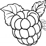 Coloriage Framboise fruit