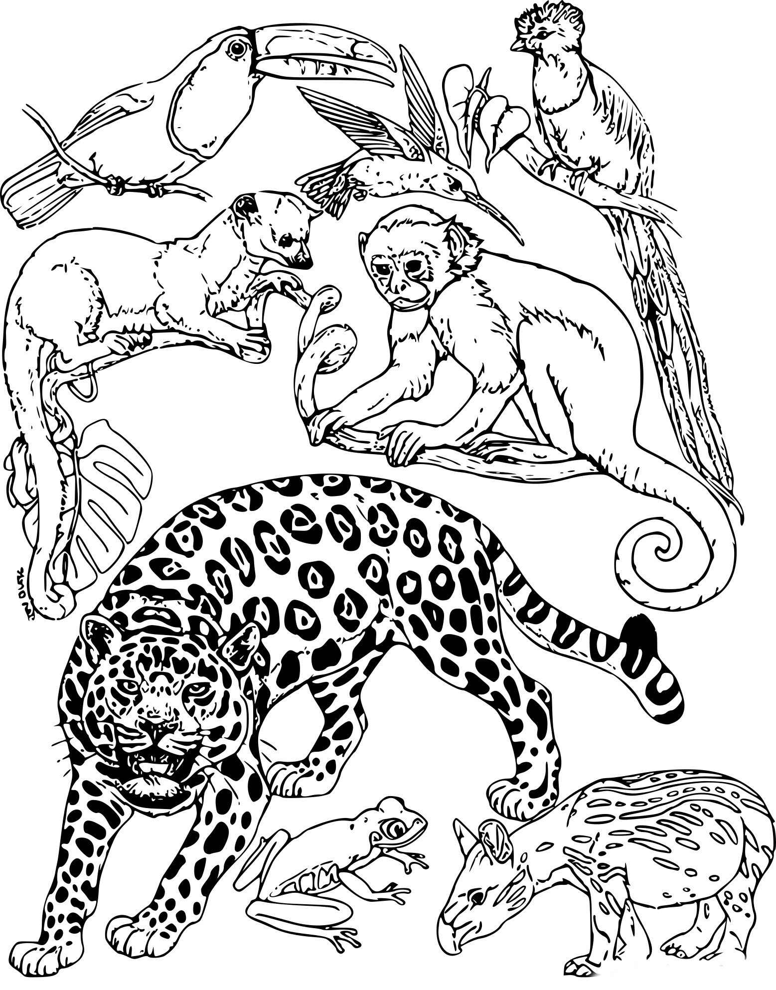 Coloriage animaux de la jungle imprimer sur coloriages info - Dessin de jungle ...
