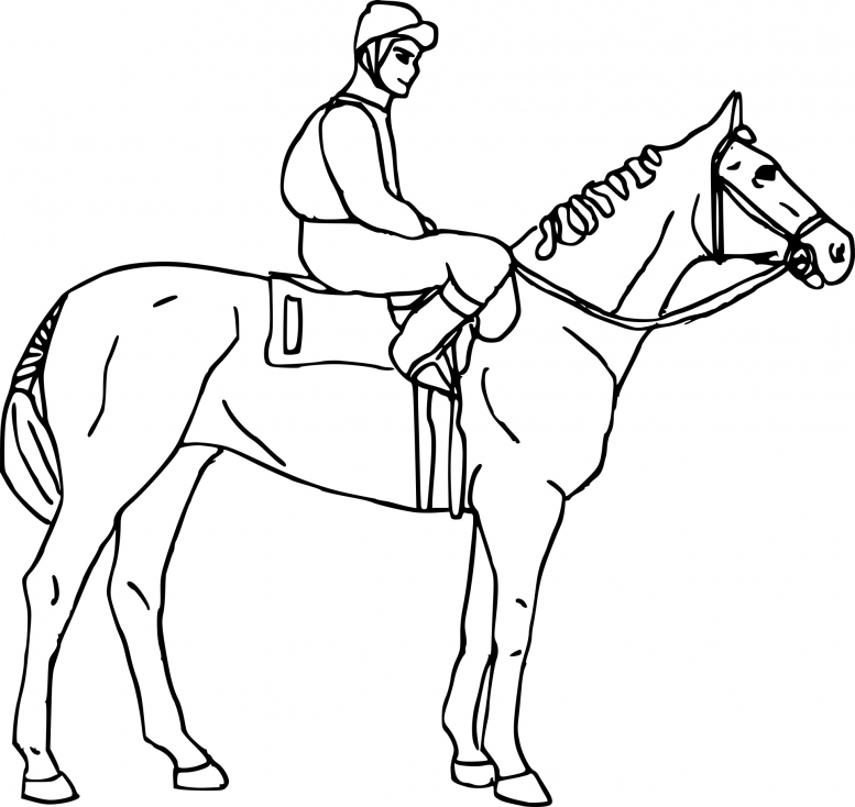 Cheval equitation