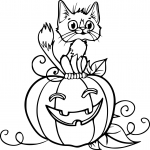 Chat citrouille Halloween