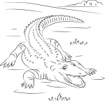 Coloriage Crocodile du Nil