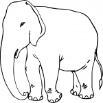 Coloriage Elephant adulte