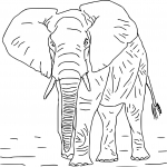 Coloriage Elephant difficile