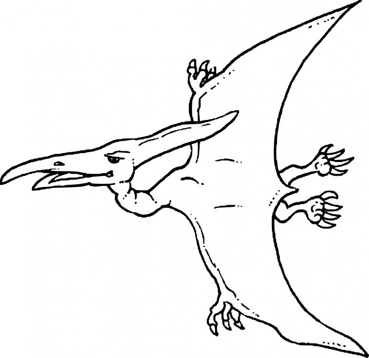 Coloriage Dinosaure oiseau à imprimer