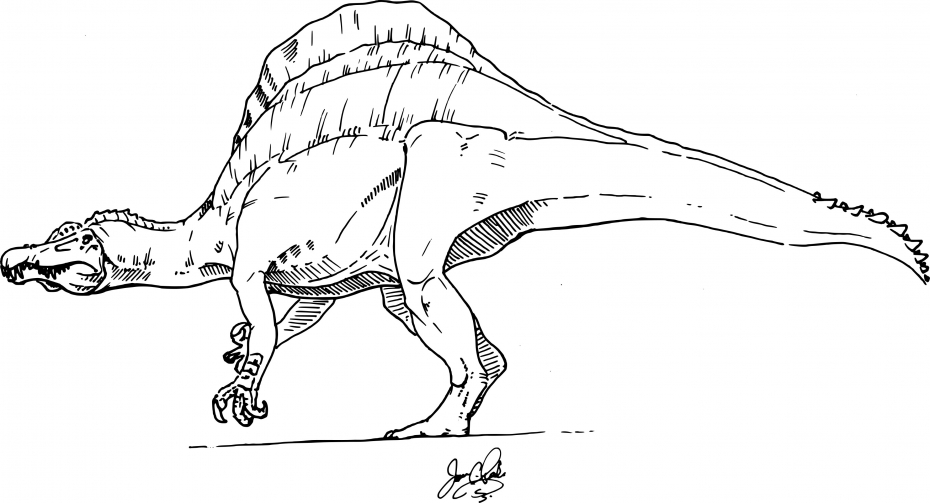 Coloriage Dinosaure spinosaure à imprimer
