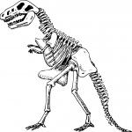 Dinosaure squelette dessin à colorier