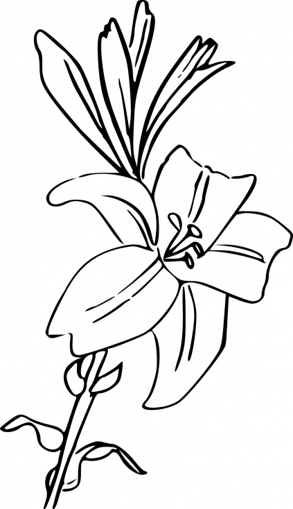 Coloriage Fleur Lys à imprimer