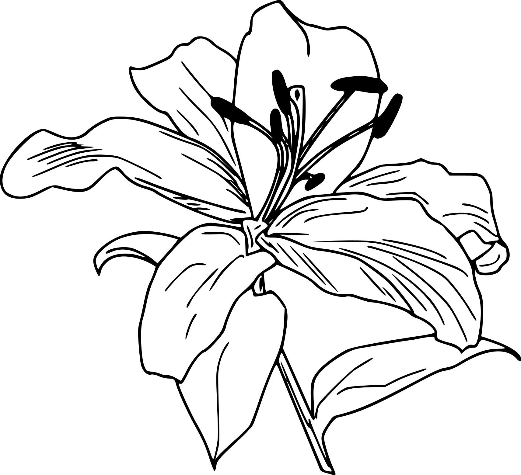 Coloriage lys imprimer sur coloriages info - Dessin fleur de lys royale ...