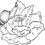 Escargot mange une salade dessin à colorier